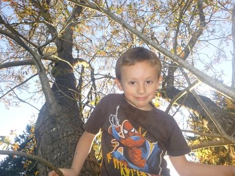 Braxton_in_tree.JPG